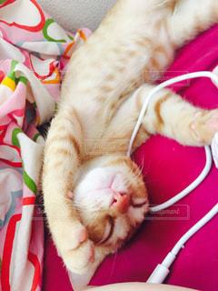 猫の写真・画像素材[275890]