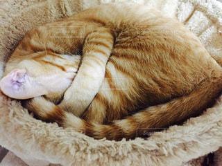 猫の写真・画像素材[275891]
