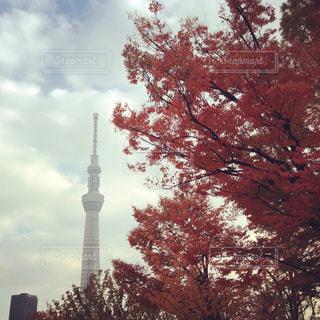 風景 - No.276805