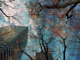 都会の空の写真・画像素材[276391]