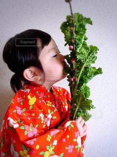 No.366018 菜の花