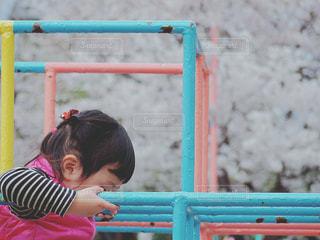 春の公園の写真・画像素材[435178]