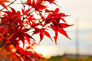 秋の風景の写真・画像素材[891568]