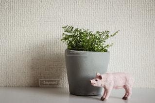 ブタと観葉植物 - No.928696