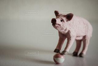 ブタのボール遊び - No.928753