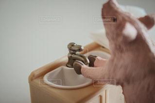 ブタの手洗い - No.928756