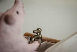 ブタの手洗いの写真・画像素材[928757]