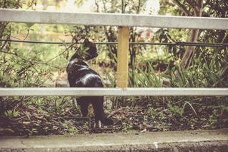 白と黒の野良ネコの写真・画像素材[1089790]