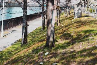 川沿いの道の写真・画像素材[1090004]