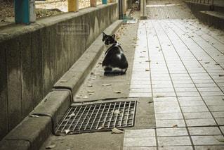 振り向いたノラ猫の写真・画像素材[1092320]