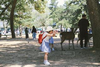 奈良公園で遊ぶ子供の写真・画像素材[1151071]