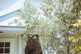 家とオリーブの木の写真・画像素材[1169208]