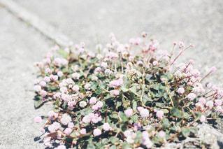 野花の写真・画像素材[1216187]
