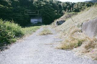 田舎の道の写真・画像素材[1216196]
