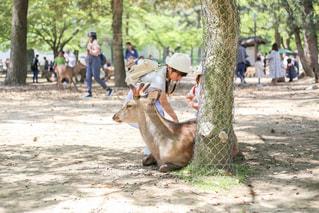 鹿を触る子供の写真・画像素材[1269161]