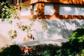 秋の写真・画像素材[1556377]