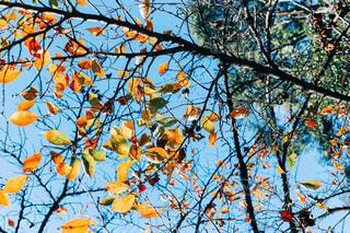 秋の空の写真・画像素材[1631984]