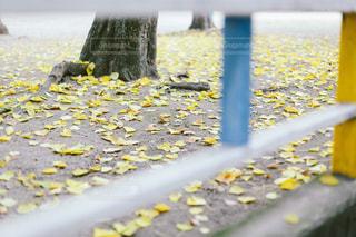 落ち葉の写真・画像素材[1655102]