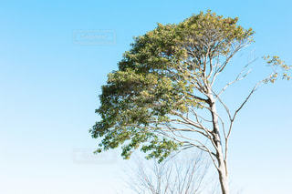 木と空の写真・画像素材[1701424]