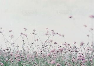 花畑の写真・画像素材[2373577]