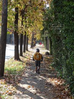 木々の間の歩道を歩く少年の写真・画像素材[4319112]