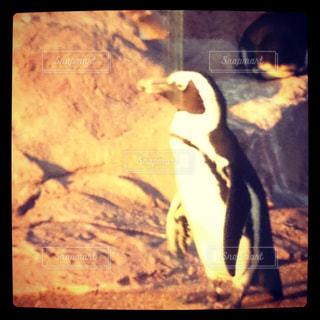 ペンギン - No.275865