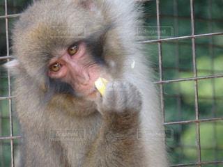 No.276060 猿
