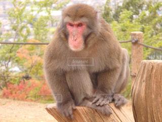 No.276061 猿