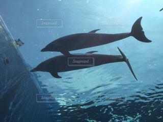 下から見上げるイルカの写真・画像素材[278617]