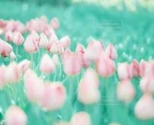 花畑の写真・画像素材[4366]