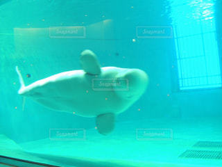 泳ぐの写真・画像素材[276228]