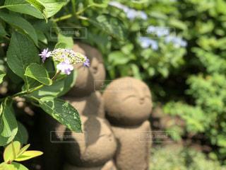 庭園の緑の植物の写真・画像素材[1510816]
