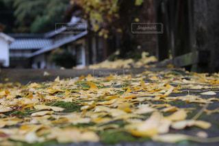 秋の写真・画像素材[527724]