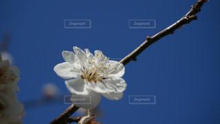 自然の写真・画像素材[276475]