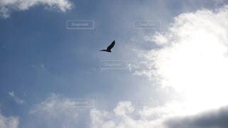 自然の写真・画像素材[276480]