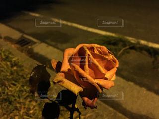 花の写真・画像素材[291144]
