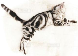 猫 - No.277753