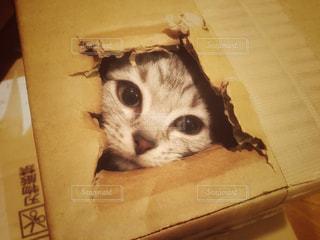 No.277767 猫