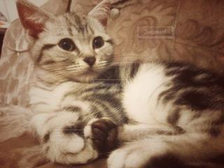 No.277768 猫