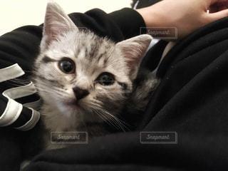 猫 - No.277775