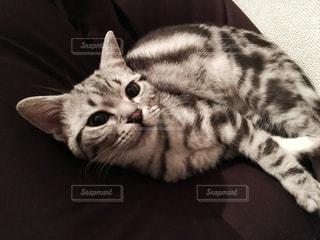猫 - No.277779