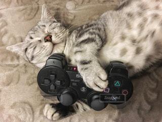 No.277781 猫
