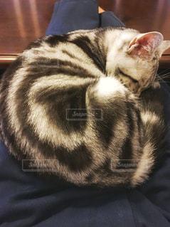 猫 - No.277794