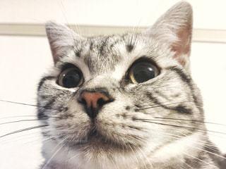 No.277797 猫