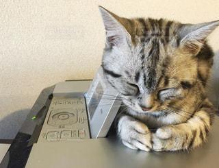猫 - No.277801