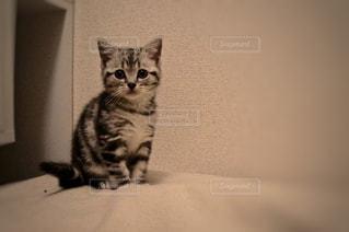 猫の写真・画像素材[277802]