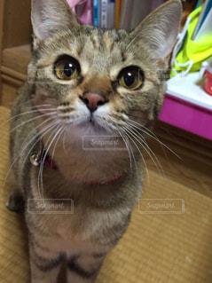 猫の写真・画像素材[277700]