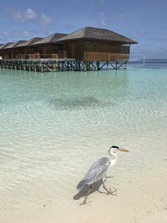 モルディブの水上コテージとビーチに立っている鳥の写真・画像素材[1620083]