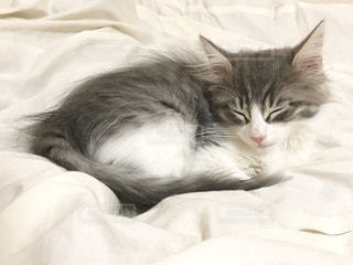 ベッドに横たわっている猫の写真・画像素材[2705272]