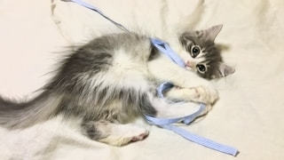 ベッドに横たわっている猫の写真・画像素材[2705277]